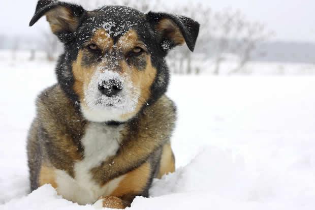 Hondvriendelijke Wintersport